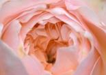 Evelyne Rose