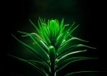 Artemisia Penhaligon´s
