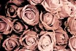Paestum Rose Eau D´Italie