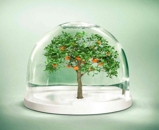 Azemour Les Orangers