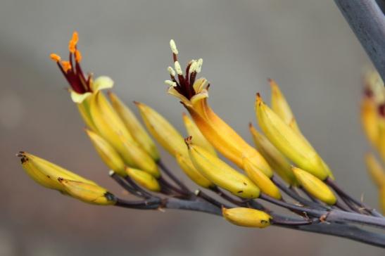 Že by kvetoucí banány? Foto: Flickr, Quinn Dombrowski
