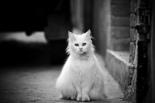 Les Voiles Depliees Gato