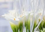L'Amour Fleuri Cerchi Nell'acqua